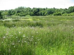 Howardian Local Nature Reserve Meadow
